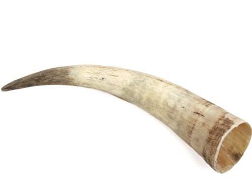 Rinderhorn natur 40-49cm – Bild