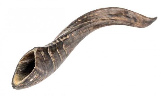 Schafhorn poliert 15-25cm – Bild 1