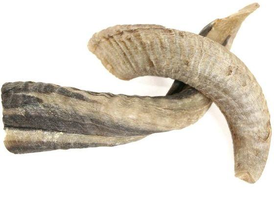 Schafshorn natur 31-35cm – Bild