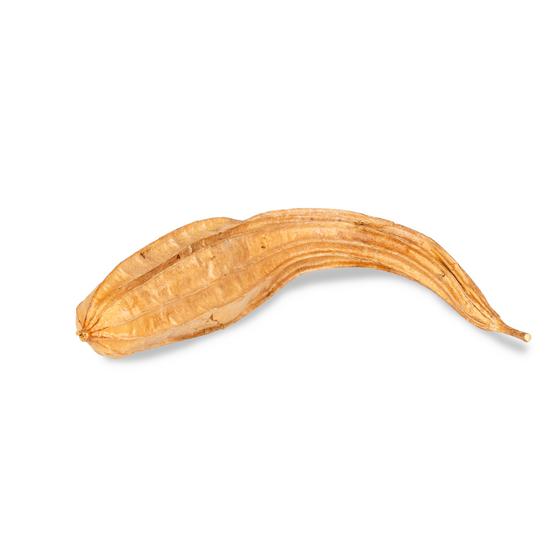 Schwammgurke natur ca. 30-45cm – Bild 1