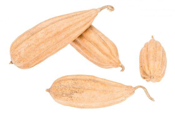 Luffa Frucht natur ca. 8-15cm | Schwammgurke – Bild 2
