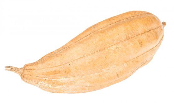 Luffa Frucht natur ca. 8-15cm | Schwammgurke – Bild 1