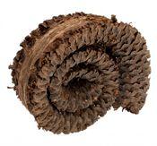 Palm Schnecke ca. 5-7cm – Bild 1