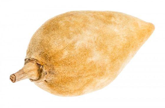 Baobab Frucht ca.10cm – Bild