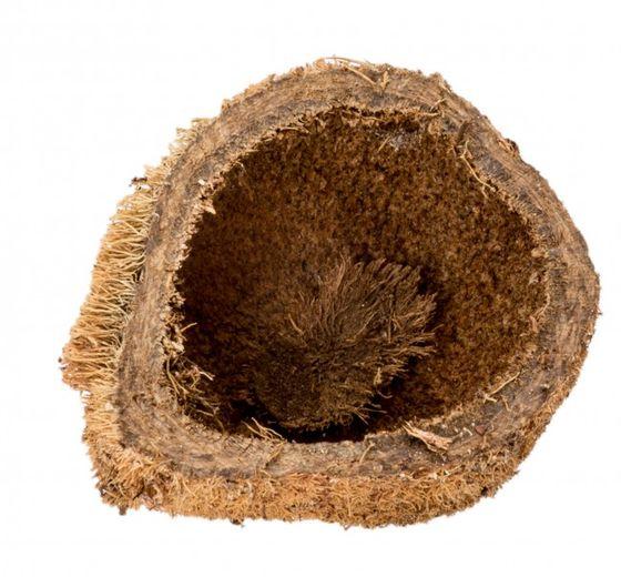 Sahel Apfel geschält ca.4-5cm – Bild 2