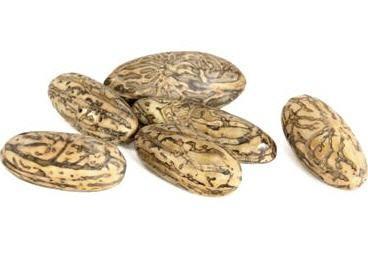 Thika Nuss Samen geschliffen ca. 5-7cm – Bild 2