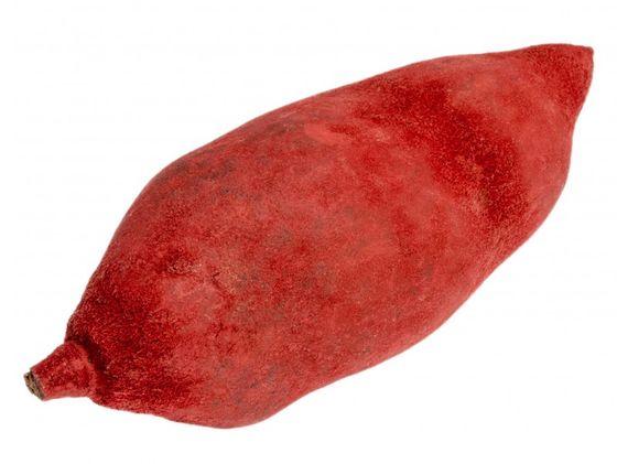 Baobab rot ca. 9-12cm – Bild