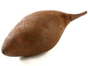 Baobab Frucht braun ca. 9-12cm | Adansonia digitata – Bild