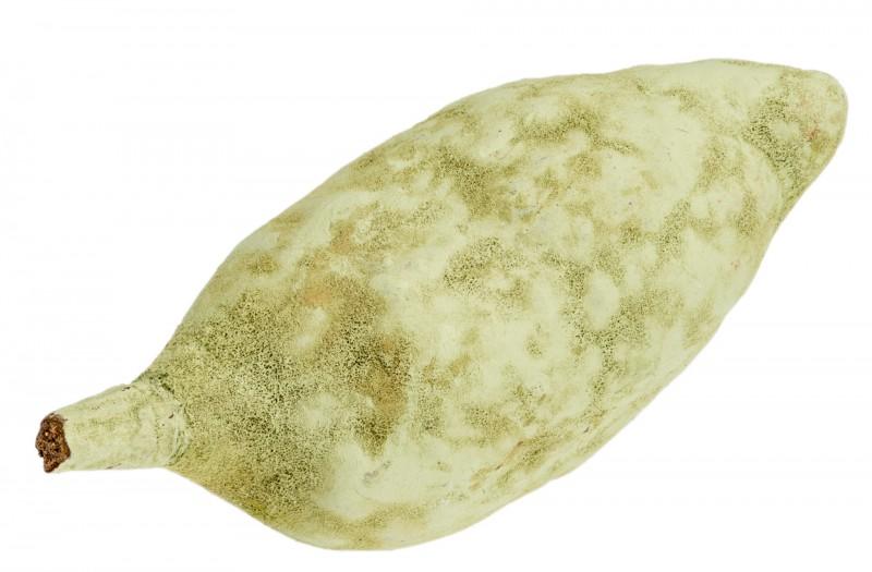 Baobab Frucht grün ca. 10cm