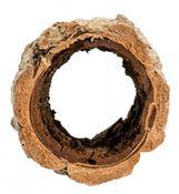 Korkeiche groß 20cm – Bild 2