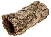 Korkeiche groß 20cm – Bild 1