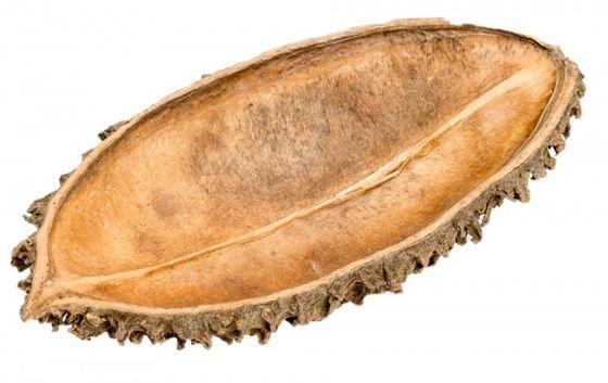 Bolsa de pastor ca. 5-8cm | Zeyheria montana Mart – Bild 1