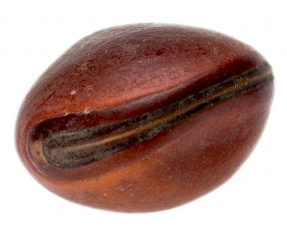 Bean Olho de Boi hellbraun – Bild 1