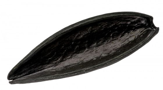 Canoinha schwarz – Bild