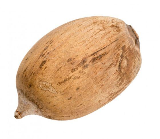 Cacho de coco Nuss ca. 9-14cm | Attalea speciosa  – Bild