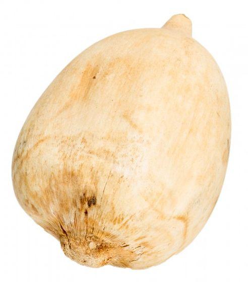 Cacho de coco nuss gebleicht ca. 9-14cm – Bild