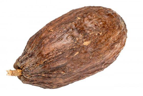 Kakaoschote braun ca. 10cm – Bild 1