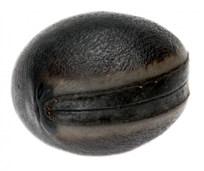 Bean Olho de Boi dunkel