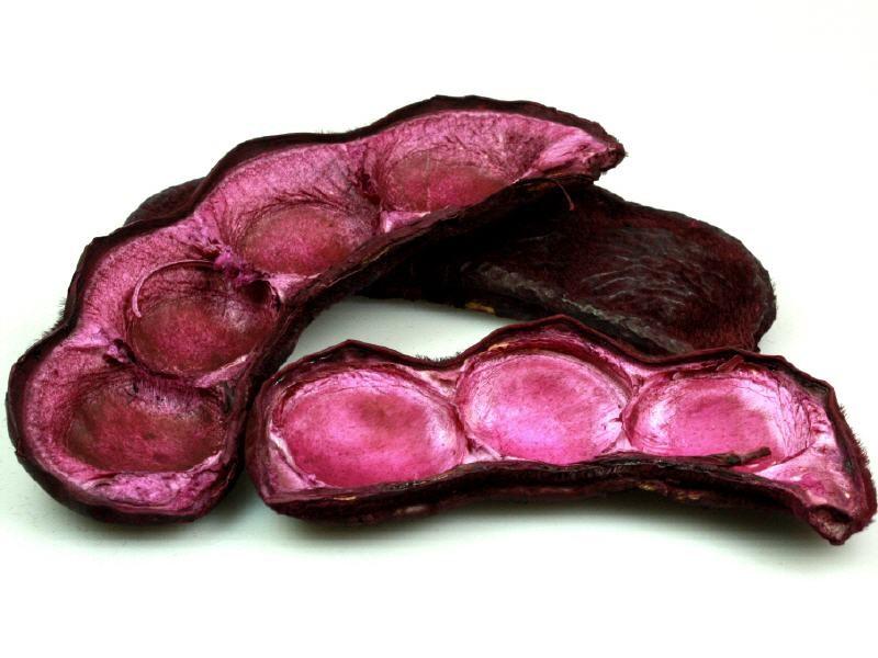 Velvet Bean brombeer ca. 7-14 cm