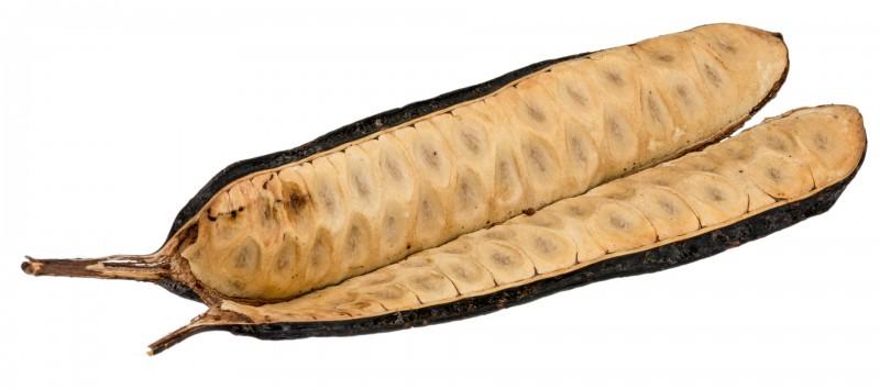 Bean Leitosa ca. 15cm | Parkia pendula