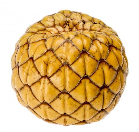 Rumbia Frucht ca. 3-5cm – Bild 1