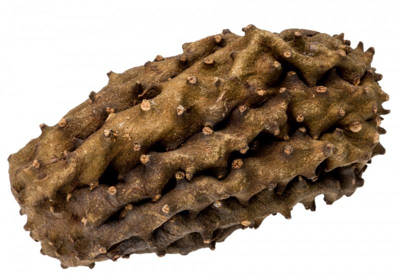 Krokodil Frucht ca. 12cm