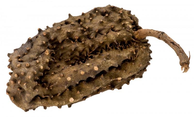 Krokodil Frucht ca. 10-15cm   Annona muricata