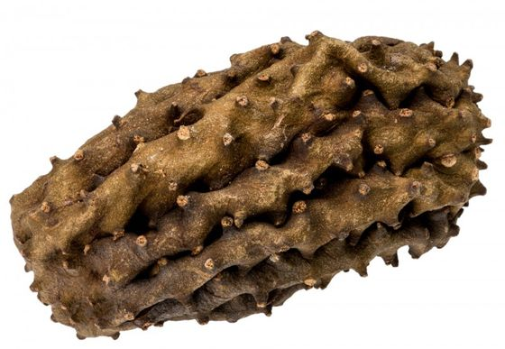 Krokodil Frucht ca. 12cm – Bild 1