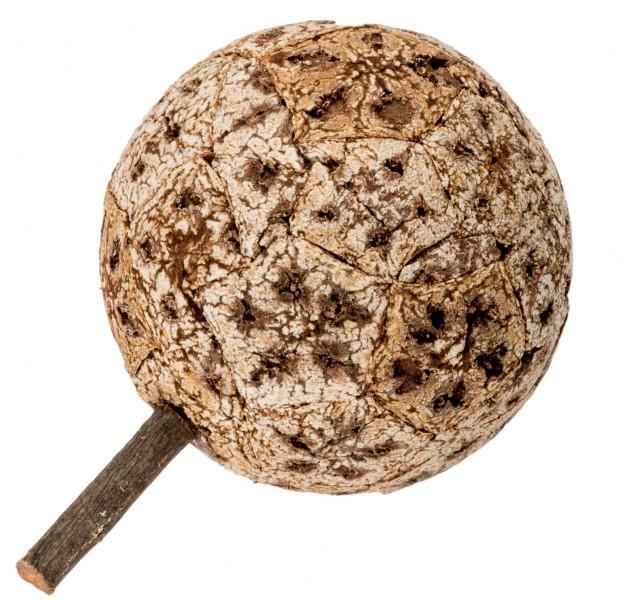 Korkfrucht Øca. 10-12cm