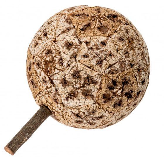 Korkfrucht Øca. 10-12cm – Bild
