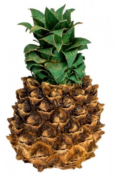 Mini Ananas getrocknet 8-13cm