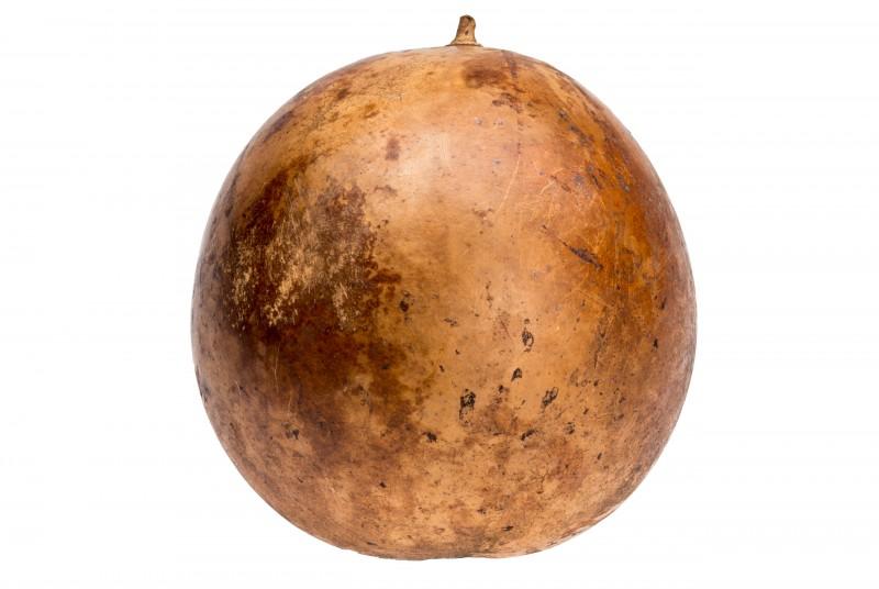 Ballon Frucht natur ca. 18-25cm | Calotropis procera