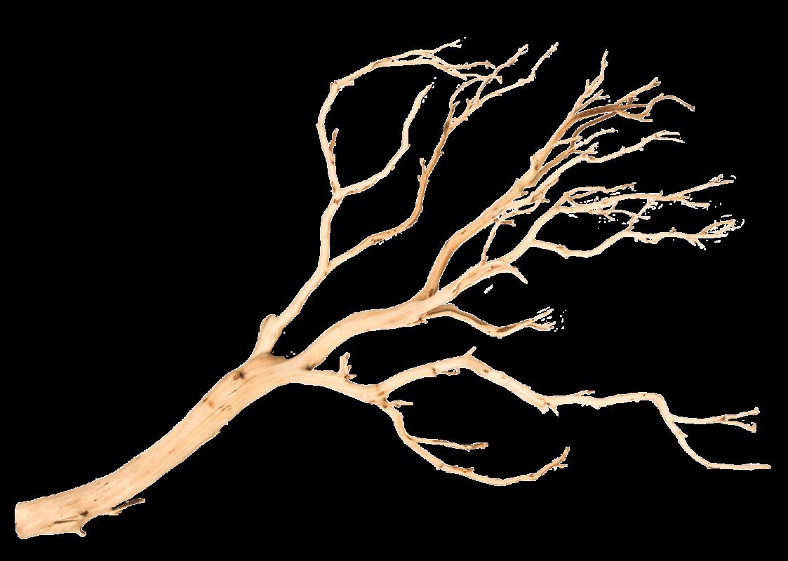 Manzanita Baum sandgestrahlt ca. 120cm hoch