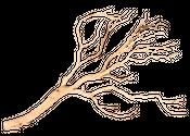 Manzanita Baum sandgestrahlt ca. 120cm hoch – Bild 1