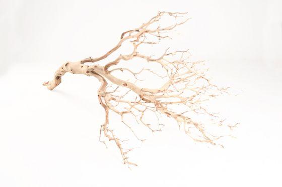 Manzanita Baum sandgestrahlt ca. 90cm hoch – Bild 1