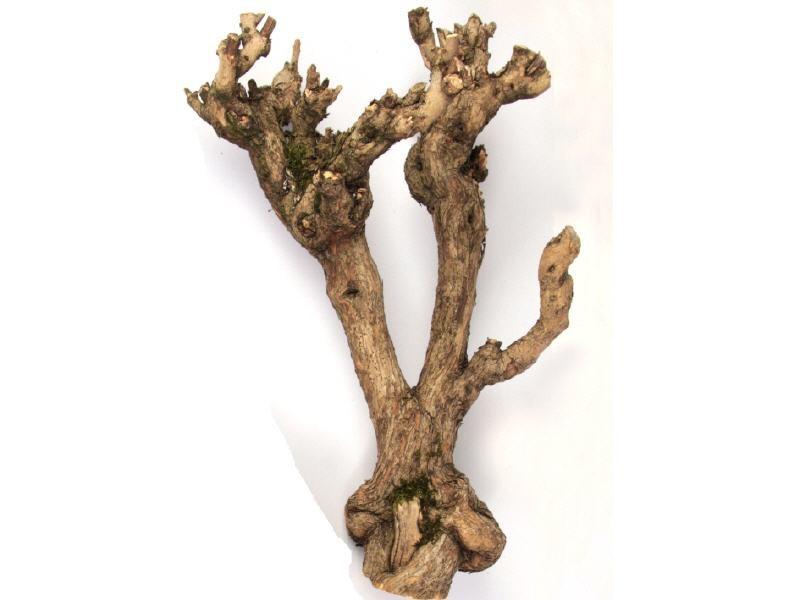 Flieder Holz klein ca. 40cm
