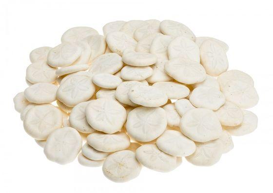Sanddollar mini ca. 2,5cm Box mit ca. 300g – Bild 1