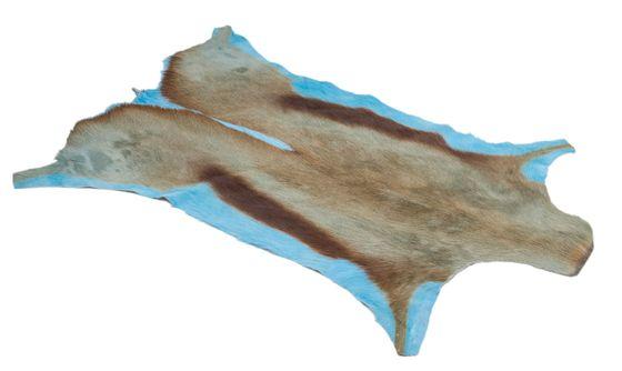 Springbockfell hellblau ca. 80-100cm | Antilopenfell – Bild 4