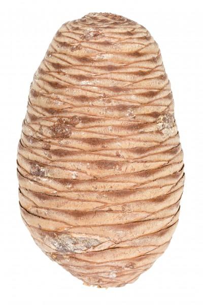 Zeder Zapfen natur 12 Stk. ca. 6-10cm