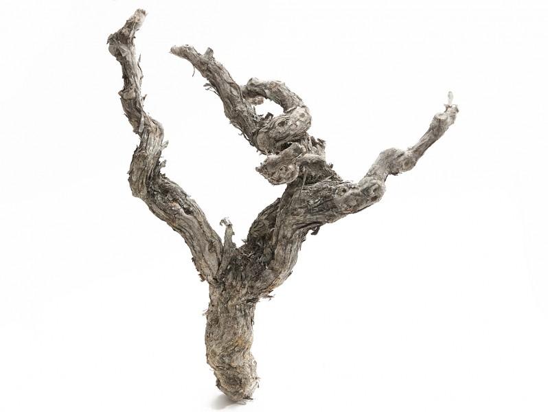 Weinrebe 40-45cm weiß