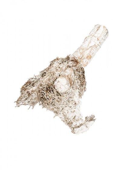 Bambuswurzel weiß ca. 40 cm – Bild