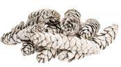 Strobus large weiß 14-20cm 10 Stück – Bild 1