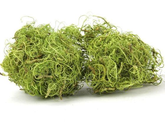 Curly Moos grün 500g  – Bild