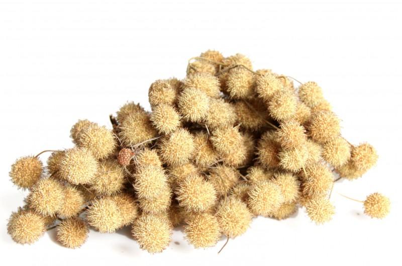 Platan Bälle natur 1 Bund ca. 250g