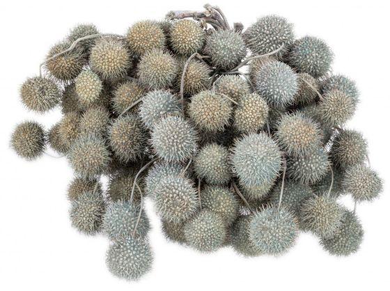 Platan Bälle türkis im Bund ca. 250g – Bild