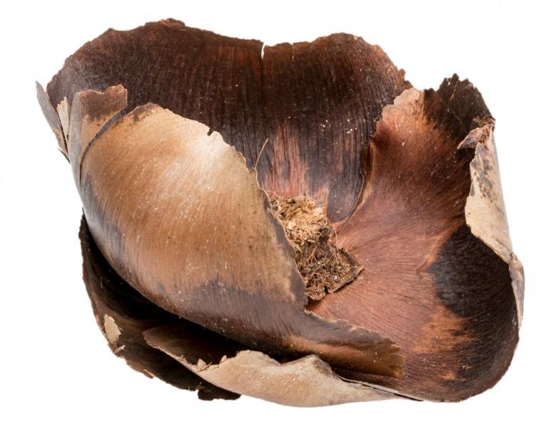Palm Cup natur ca. 8cm