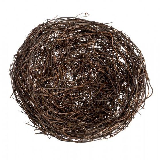 Clematis Nest 8cm – Bild