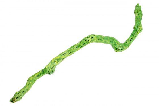 Shola Stick apfelgrün – Bild 1