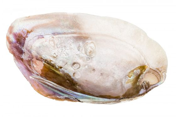 Muschelschalen groß ca. 15-20cm – Bild 1