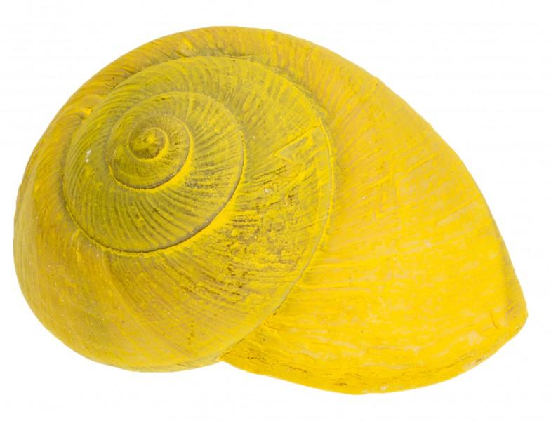 Lamarkiana Schnecke gelb 7cm